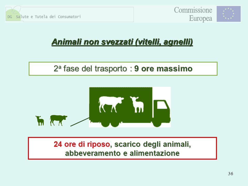 36 Animali non svezzati (vitelli, agnelli) 2 a fase del trasporto : 9 ore massimo 24 ore di riposo, scarico degli animali, abbeveramento e alimentazio