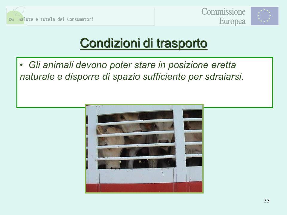 53 Gli animali devono poter stare in posizione eretta naturale e disporre di spazio sufficiente per sdraiarsi. Condizioni di trasporto