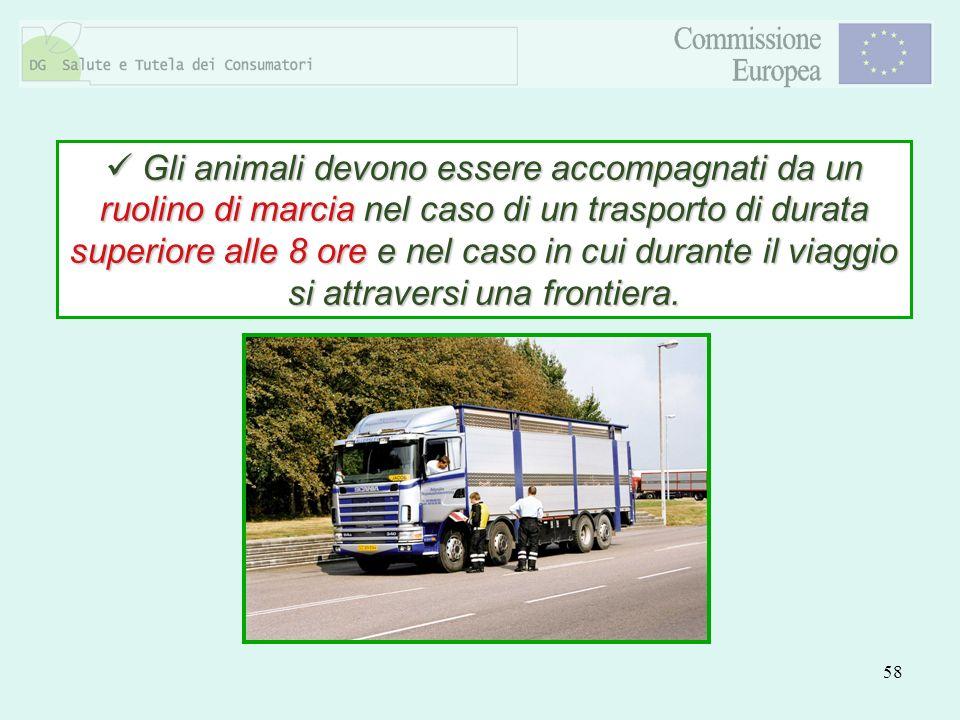 58 Gli animali devono essere accompagnati da un ruolino di marcia nel caso di un trasporto di durata superiore alle 8 ore e nel caso in cui durante il
