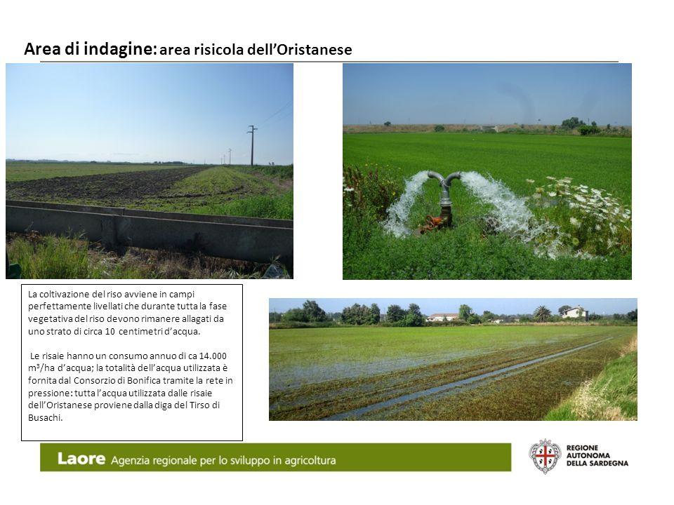 Area di indagine: area risicola dellOristanese Laore Agenzia regionale per lo sviluppo in agricoltura La coltivazione del riso avviene in campi perfet