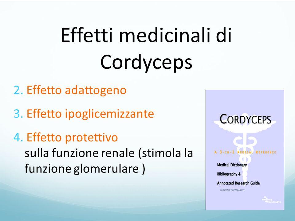 Effetti medicinali di Cordyceps 2. Effetto adattogeno 3. Effetto ipoglicemizzante 4. Effetto protettivo sulla funzione renale (stimola la funzione glo
