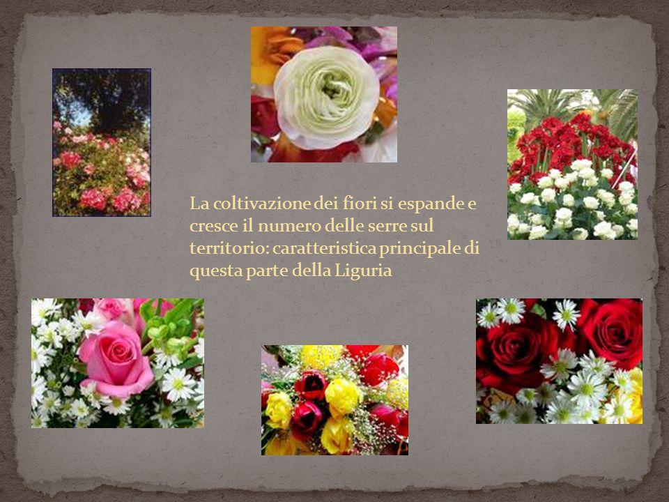 La coltivazione dei fiori si espande e cresce il numero delle serre sul territorio: caratteristica principale di questa parte della Liguria
