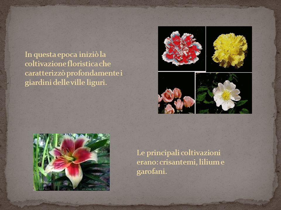In questa epoca iniziò la coltivazione floristica che caratterizzò profondamente i giardini delle ville liguri. Le principali coltivazioni erano: cris
