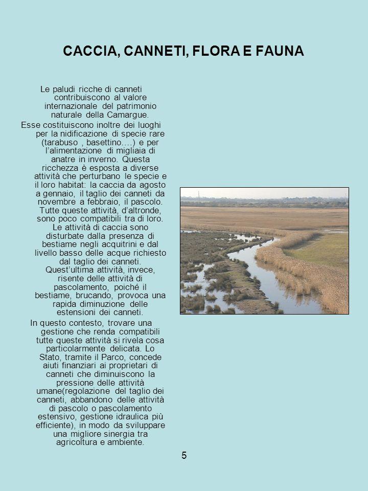 5 CACCIA, CANNETI, FLORA E FAUNA Le paludi ricche di canneti contribuiscono al valore internazionale del patrimonio naturale della Camargue. Esse cost