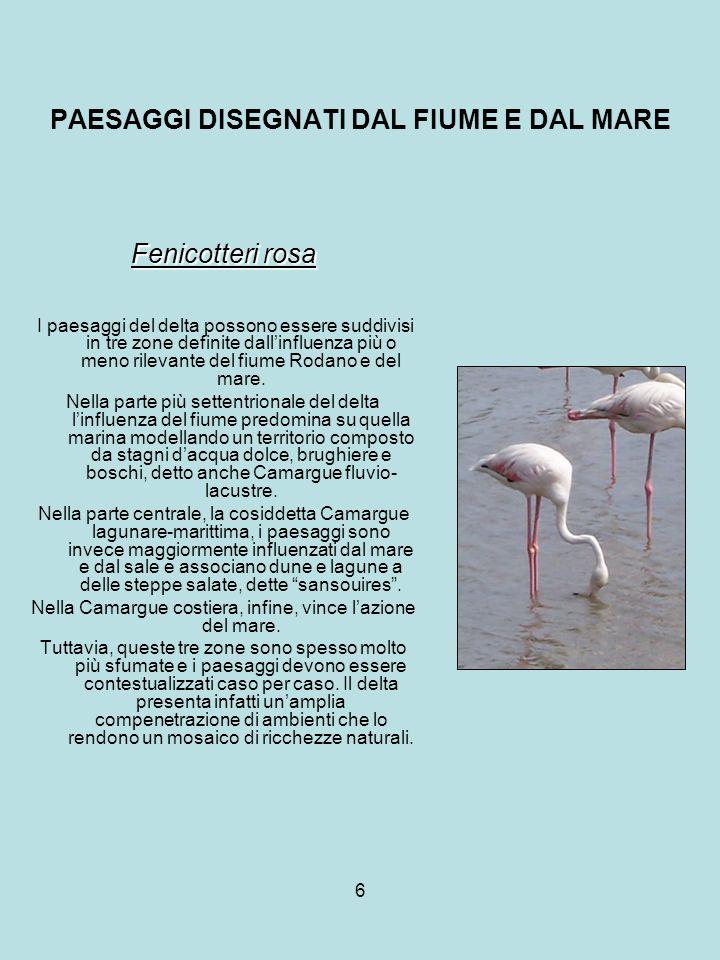 6 PAESAGGI DISEGNATI DAL FIUME E DAL MARE Fenicotteri rosa I paesaggi del delta possono essere suddivisi in tre zone definite dallinfluenza più o meno