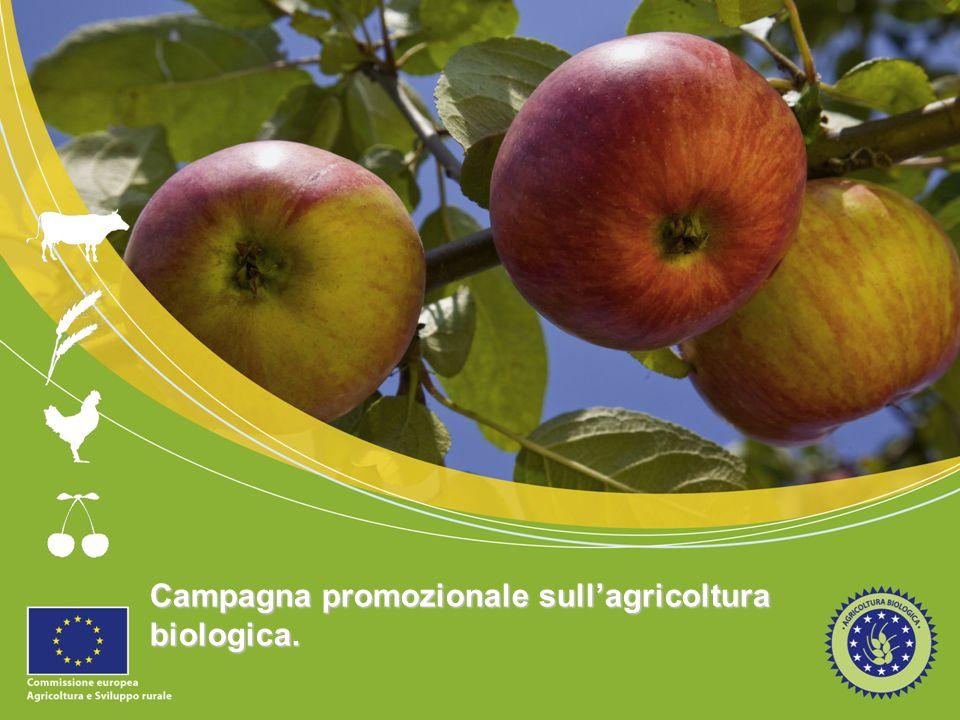 12 Slogan della Campagna Lo slogan… Rappresenta gli obbiettivi principali della campagna Riflette i maggiori benefici dellagricoltura biologica per i gruppi target Sarà stampato su del materiale promozionale e sarà presente sul sito web per incrementare la familiarità con la campagna.