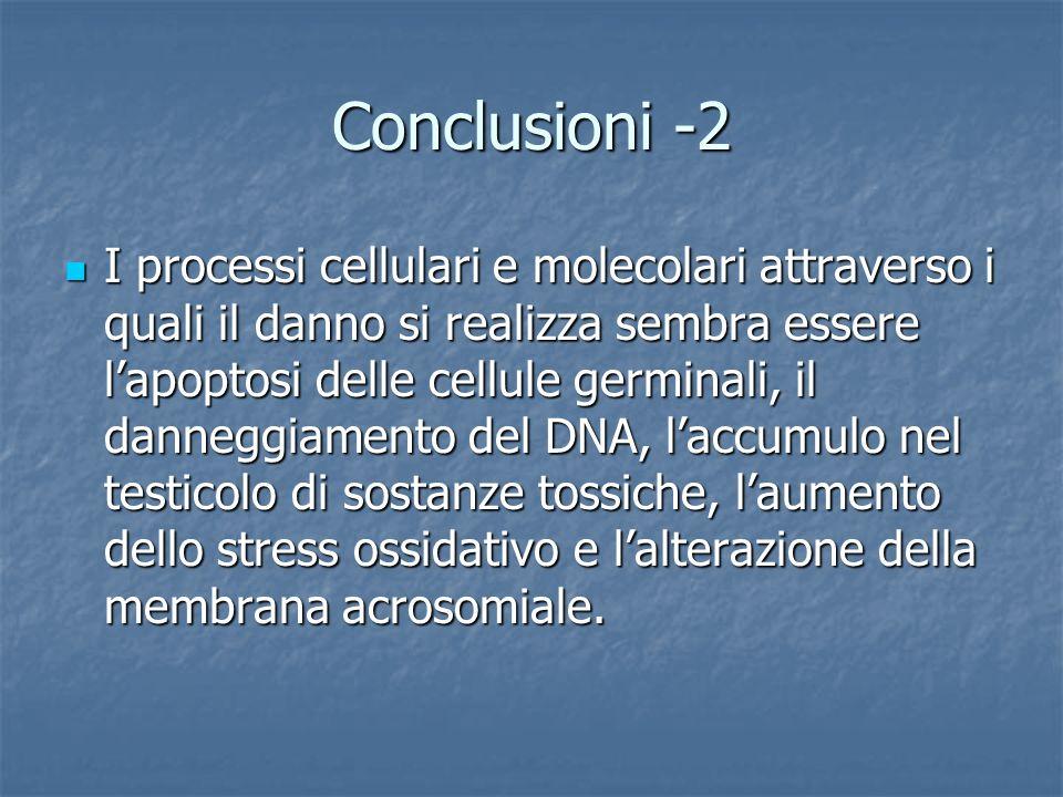 Conclusioni -2 I processi cellulari e molecolari attraverso i quali il danno si realizza sembra essere lapoptosi delle cellule germinali, il danneggia