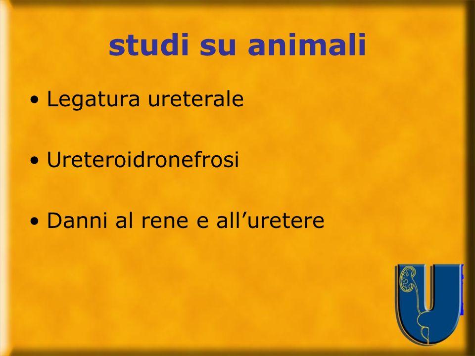 studi su animali Legatura ureterale Ureteroidronefrosi Danni al rene e alluretere