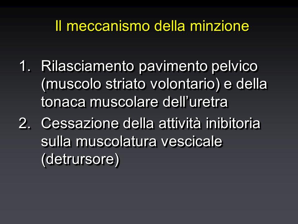 Il meccanismo della minzione 1.Rilasciamento pavimento pelvico (muscolo striato volontario) e della tonaca muscolare delluretra 2.Cessazione della attività inibitoria sulla muscolatura vescicale (detrursore) 1.Rilasciamento pavimento pelvico (muscolo striato volontario) e della tonaca muscolare delluretra 2.Cessazione della attività inibitoria sulla muscolatura vescicale (detrursore)