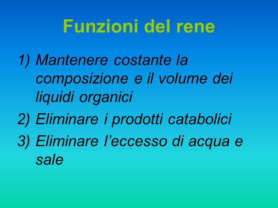 Funzioni del rene 1)Mantenere costante la composizione e il volume dei liquidi organici 2)Eliminare i prodotti catabolici 3)Eliminare leccesso di acqu
