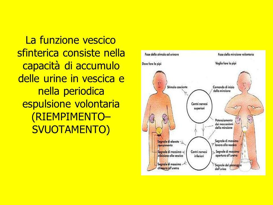 La funzione vescico sfinterica consiste nella capacità di accumulo delle urine in vescica e nella periodica espulsione volontaria (RIEMPIMENTO– SVUOTA
