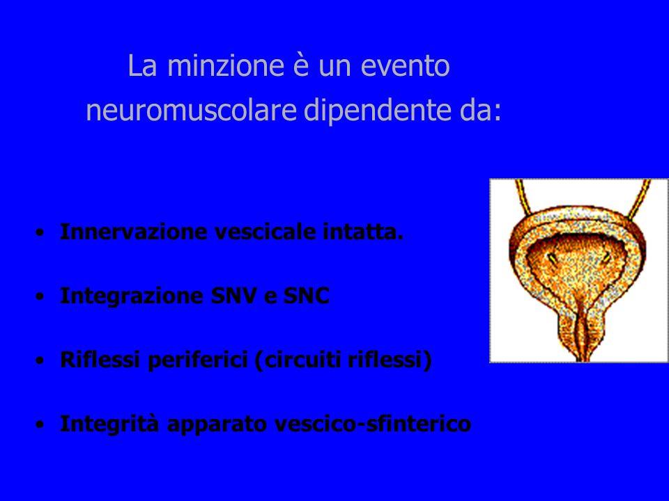 La minzione è un evento neuromuscolare dipendente da: Innervazione vescicale intatta. Integrazione SNV e SNC Riflessi periferici (circuiti riflessi) I