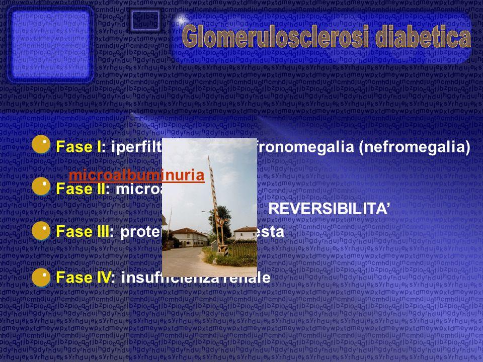 Fase I: iperfiltrazione e nefronomegalia (nefromegalia) Fase II: microalbuminuria Fase III: proteinuria manifesta Fase IV: insufficienza renale REVERS
