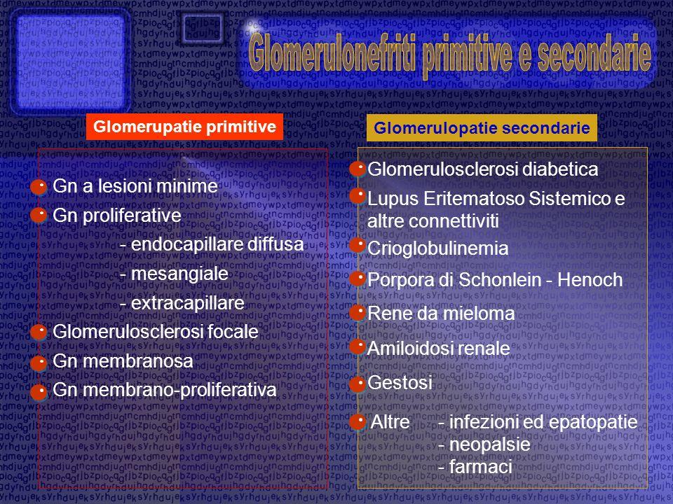 Glomerulopatie secondarie Lupus Eritematoso Sistemico e altre connettiviti Crioglobulinemia Porpora di Schonlein - Henoch Amiloidosi renale Rene da mi