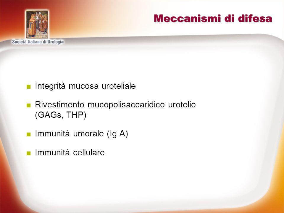 Meccanismi di difesa Integrità mucosa uroteliale Rivestimento mucopolisaccaridico urotelio (GAGs, THP) Immunità umorale (Ig A) Immunità cellulare