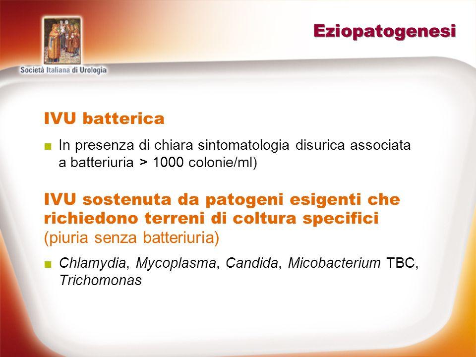 Eziopatogenesi IVU batterica In presenza di chiara sintomatologia disurica associata a batteriuria > 1000 colonie/ml) IVU sostenuta da patogeni esigen