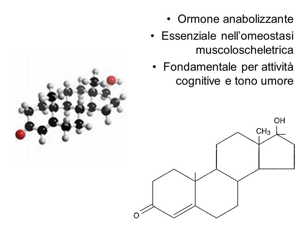 Ormone anabolizzante Essenziale nellomeostasi muscoloscheletrica Fondamentale per attività cognitive e tono umore