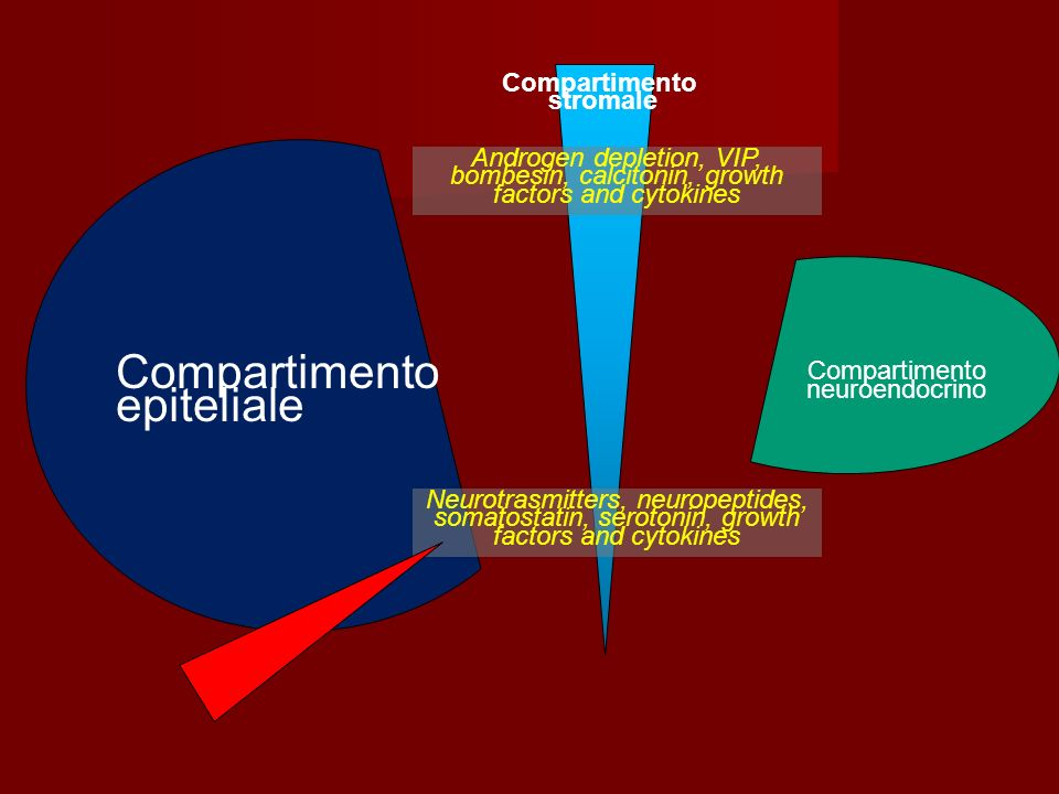 Compartimento epiteliale Compartimento neuroendocrino Compartimento stromale Androgen depletion, VIP, bombesin, calcitonin, growth factors and cytokin