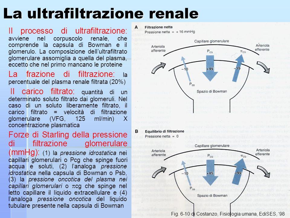 La ultrafiltrazione renale Il processo di ultrafiltrazione: avviene nel corpuscolo renale, che comprende la capsula di Bowman e il glomerulo. La compo
