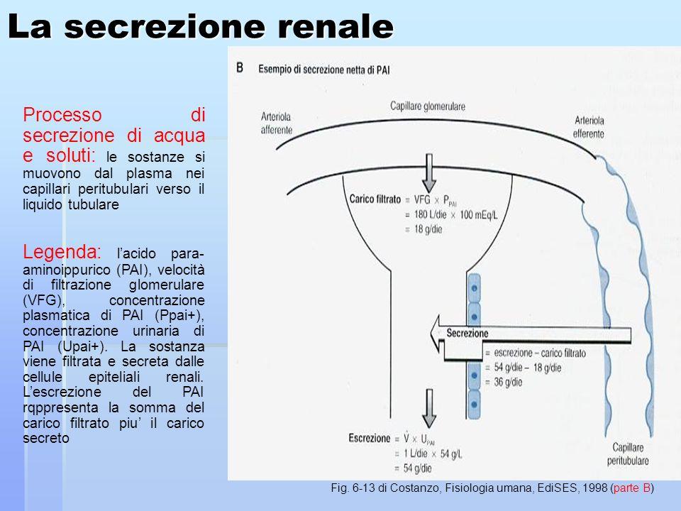 La secrezione renale Processo di secrezione di acqua e soluti: le sostanze si muovono dal plasma nei capillari peritubulari verso il liquido tubulare Legenda: lacido para- aminoippurico (PAI), velocità di filtrazione glomerulare (VFG), concentrazione plasmatica di PAI (Ppai+), concentrazione urinaria di PAI (Upai+).