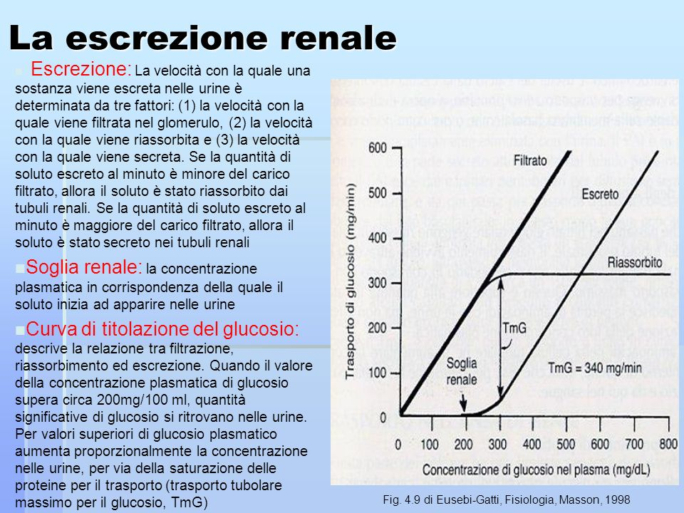 La escrezione renale n Escrezione: La velocità con la quale una sostanza viene escreta nelle urine è determinata da tre fattori: (1) la velocità con la quale viene filtrata nel glomerulo, (2) la velocità con la quale viene riassorbita e (3) la velocità con la quale viene secreta.