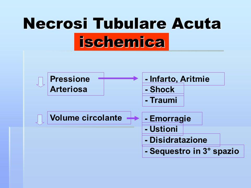 Necrosi Tubulare Acuta ischemica Pressione Arteriosa Volume circolante - Infarto, Aritmie - Shock - Traumi - Emorragie - Ustioni - Disidratazione - Sequestro in 3° spazio
