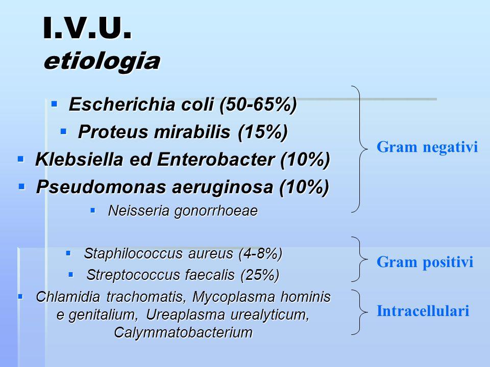I.V.U. etiologia Escherichia coli (50-65%) Escherichia coli (50-65%) Proteus mirabilis (15%) Proteus mirabilis (15%) Klebsiella ed Enterobacter (10%)
