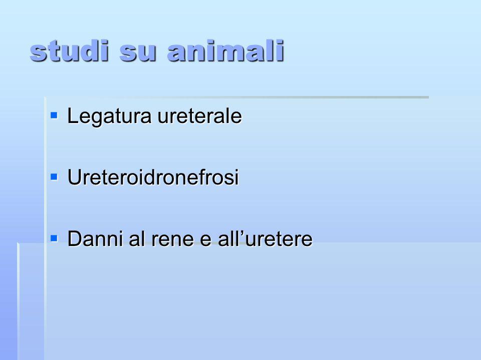 studi su animali Legatura ureterale Legatura ureterale Ureteroidronefrosi Ureteroidronefrosi Danni al rene e alluretere Danni al rene e alluretere