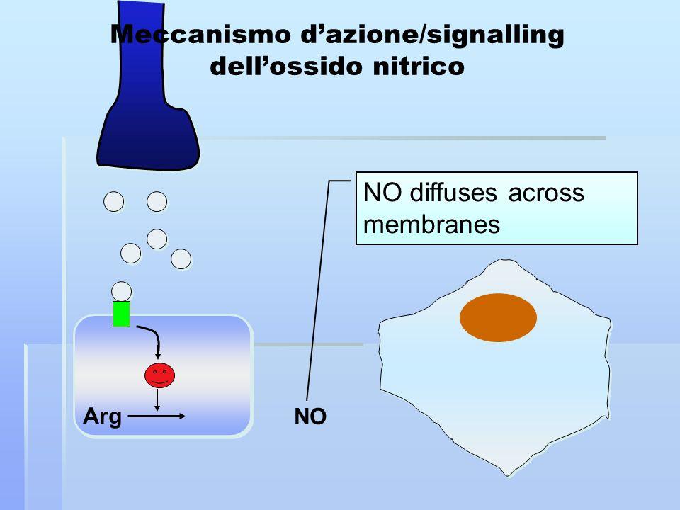 Arg NO NO diffuses across membranes Meccanismo dazione/signalling dellossido nitrico