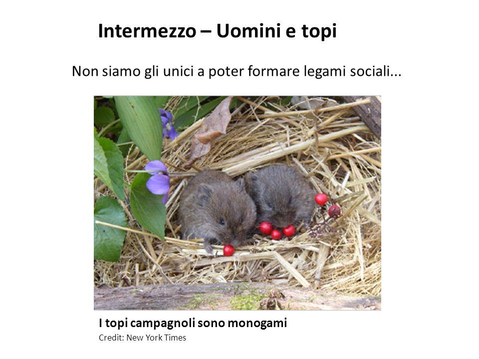 I topi campagnoli sono monogami Credit: New York Times Non siamo gli unici a poter formare legami sociali... Intermezzo – Uomini e topi