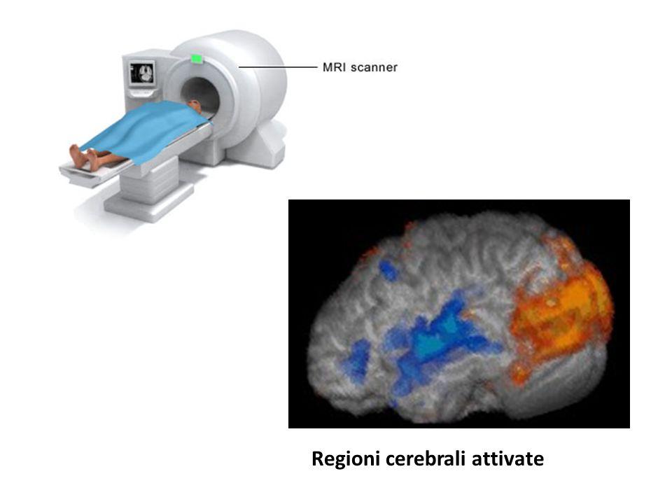 Regioni cerebrali attivate