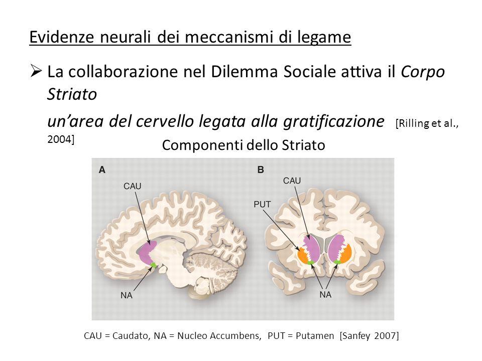 Evidenze neurali dei meccanismi di legame La collaborazione nel Dilemma Sociale attiva il Corpo Striato unarea del cervello legata alla gratificazione