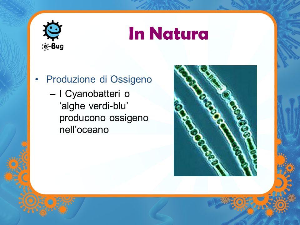 In Natura Produzione di Ossigeno –I Cyanobatteri o alghe verdi-blu producono ossigeno nelloceano