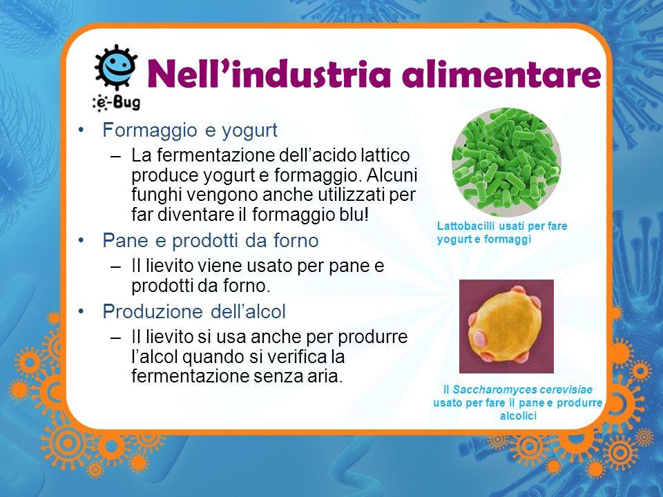 Nellindustria alimentare Formaggio e yogurt –La fermentazione dellacido lattico produce yogurt e formaggio. Alcuni funghi vengono anche utilizzati per