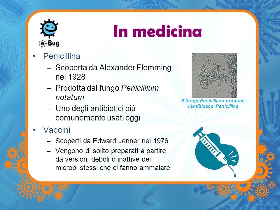 In medicina Penicillina –Scoperta da Alexander Flemming nel 1928 –Prodotta dal fungo Penicillium notatum –Uno degli antibiotici più comunemente usati