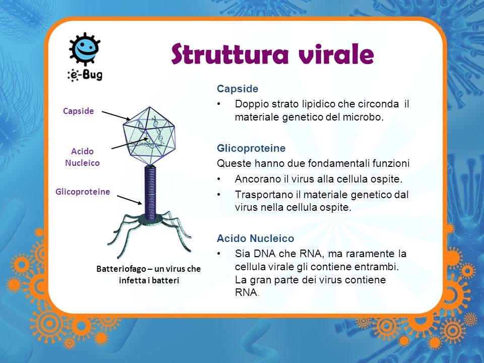 Le forme dei virus Icosaedrica (Influenza) Complessa (Batteriofago – un virus che infetta i batteri) Elicoidale (irus del mosaico del tabacco) Esistono tre principali forme di Virus