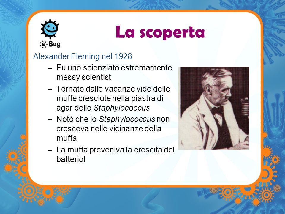 La scoperta Alexander Fleming nel 1928 –Fu uno scienziato estremamente messy scientist –Tornato dalle vacanze vide delle muffe cresciute nella piastra di agar dello Staphylococcus –Notò che lo Staphylococcus non cresceva nelle vicinanze della muffa –La muffa preveniva la crescita del batterio!