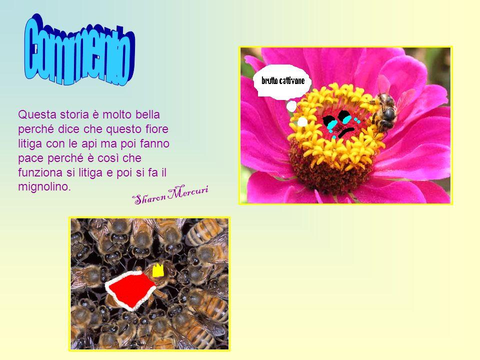 Questa storia è molto bella perché dice che questo fiore litiga con le api ma poi fanno pace perché è così che funziona si litiga e poi si fa il migno