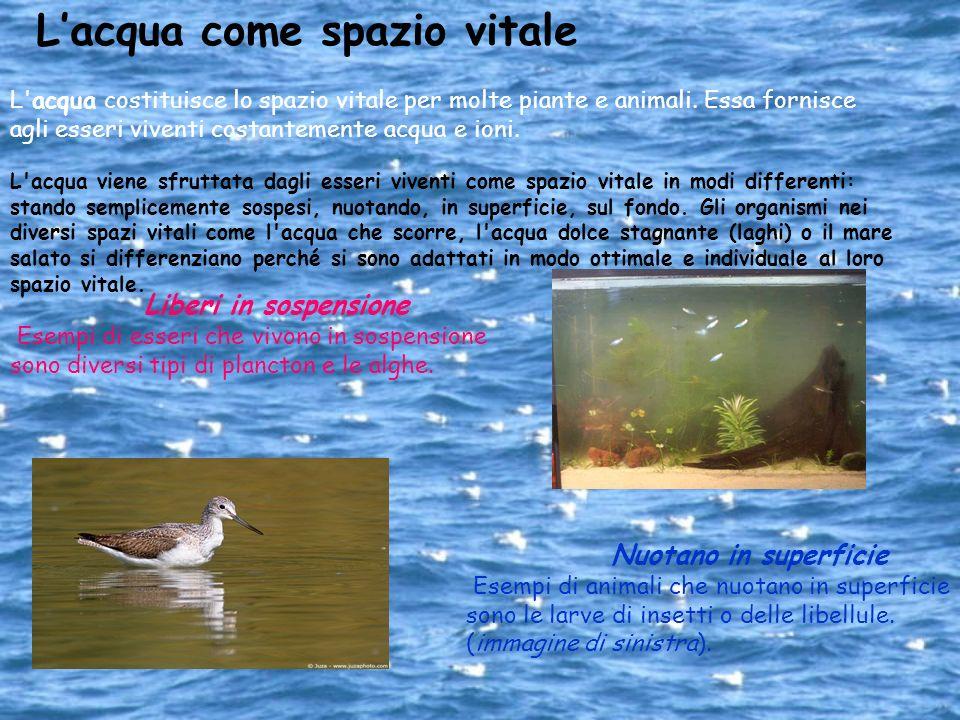 Nuotano nell acqua Alcuni animali dispongono di organi di movimento adattati alla vita nell acqua: le pinne e gli organi rematori nei pesci, nei mammiferi e nei crostacei; lo sfruttamento dell effetto di rinculo per le seppie e le meduse.