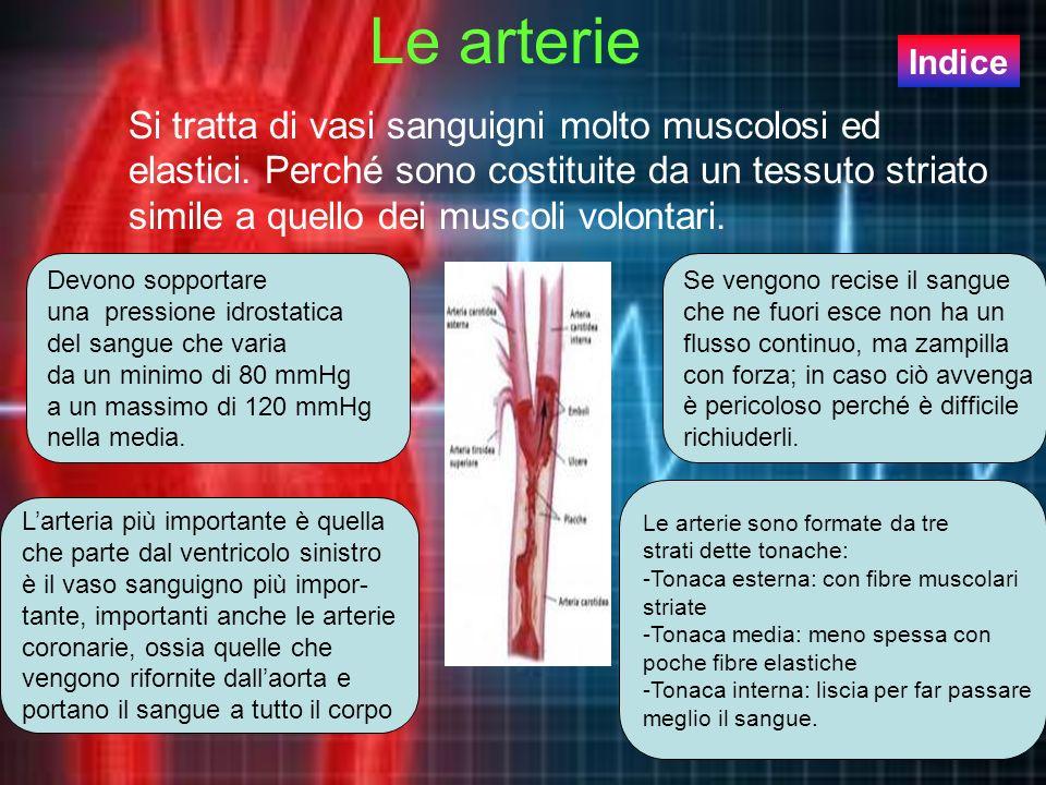 Le arterie Si tratta di vasi sanguigni molto muscolosi ed elastici. Perché sono costituite da un tessuto striato simile a quello dei muscoli volontari