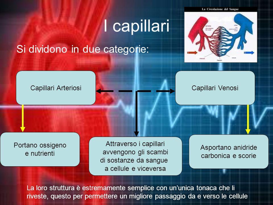 I capillari Si dividono in due categorie: La loro struttura è estremamente semplice con ununica tonaca che li riveste, questo per permettere un miglio