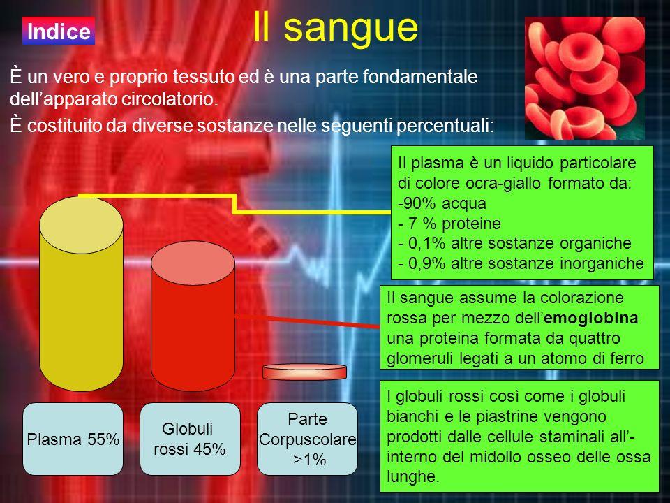 Il sangue È un vero e proprio tessuto ed è una parte fondamentale dellapparato circolatorio. È costituito da diverse sostanze nelle seguenti percentua