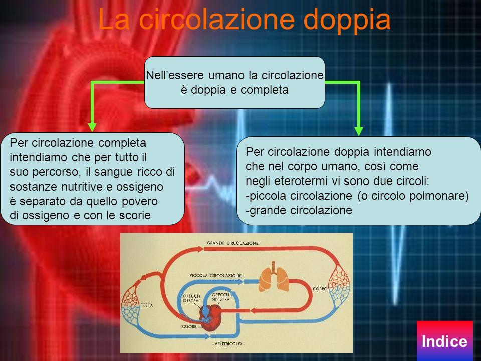 La circolazione doppia Nellessere umano la circolazione è doppia e completa Per circolazione completa intendiamo che per tutto il suo percorso, il san