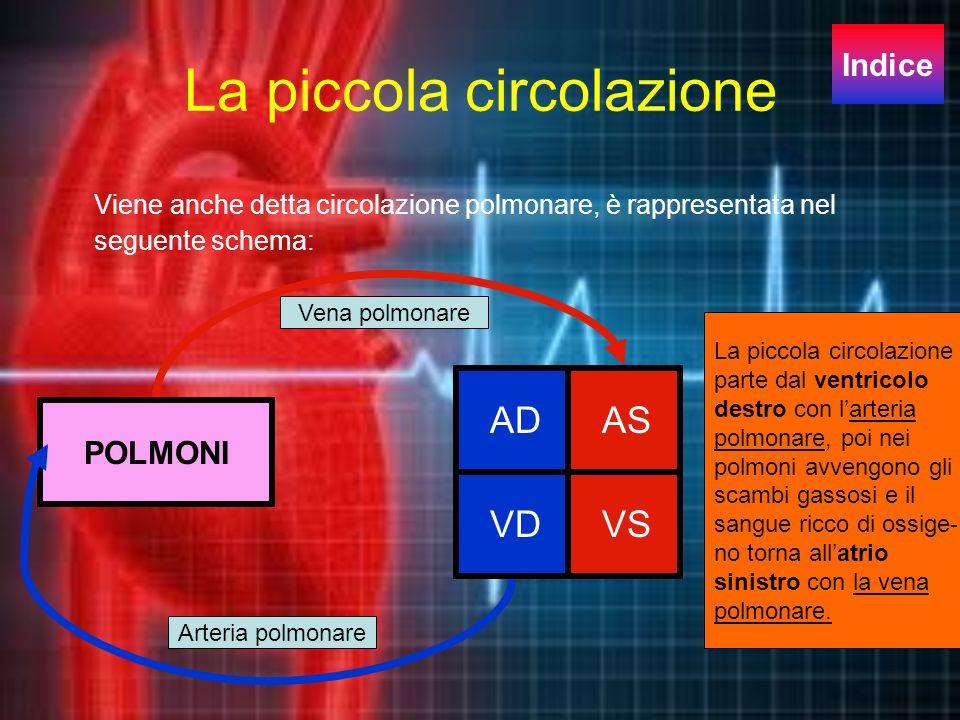 La piccola circolazione Viene anche detta circolazione polmonare, è rappresentata nel seguente schema: VDVS ADAS POLMONI Arteria polmonare Vena polmon