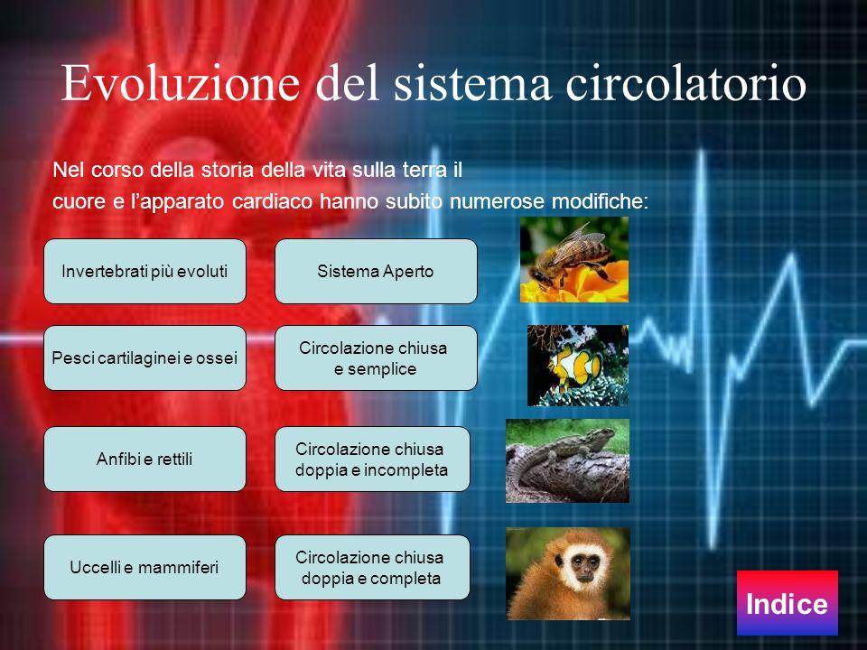 Evoluzione del sistema circolatorio Nel corso della storia della vita sulla terra il cuore e lapparato cardiaco hanno subito numerose modifiche: Siste