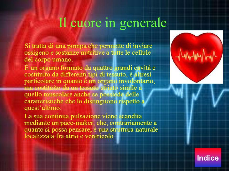 Il cuore in generale Si tratta di una pompa che permette di inviare ossigeno e sostanze nutritive a tutte le cellule del corpo umano. È un organo form