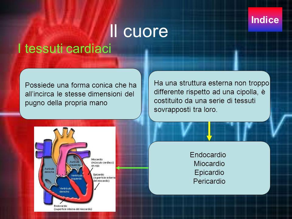 Il cuore I tessuti cardiaci Possiede una forma conica che ha allincirca le stesse dimensioni del pugno della propria mano Ha una struttura esterna non