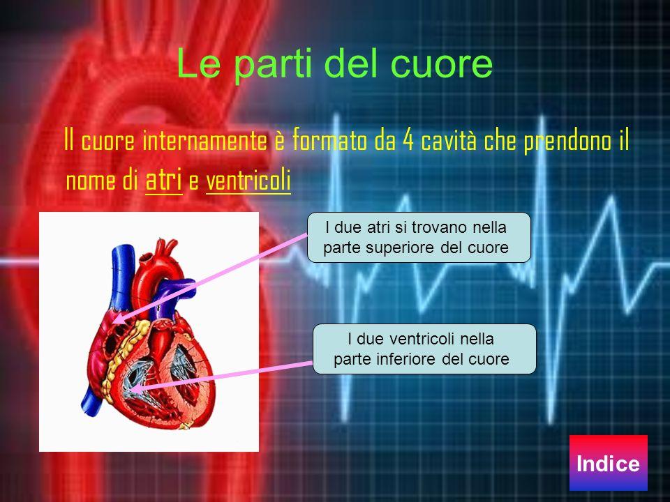 Le parti del cuore Il cuore internamente è formato da 4 cavità che prendono il nome di atri e ventricoli I due atri si trovano nella parte superiore d