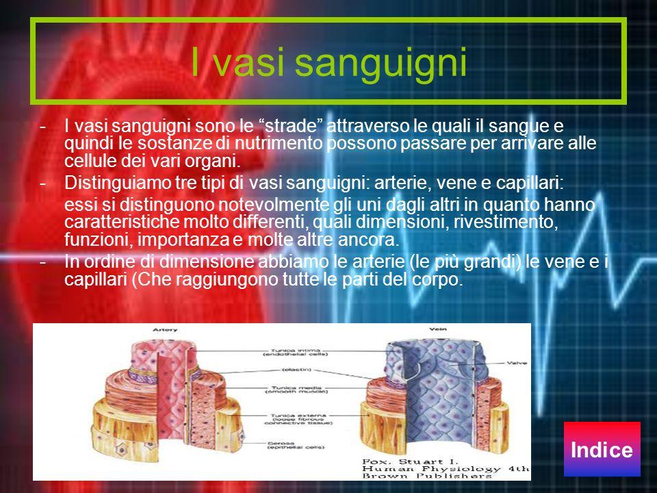 I vasi sanguigni - I vasi sanguigni sono le strade attraverso le quali il sangue e quindi le sostanze di nutrimento possono passare per arrivare alle