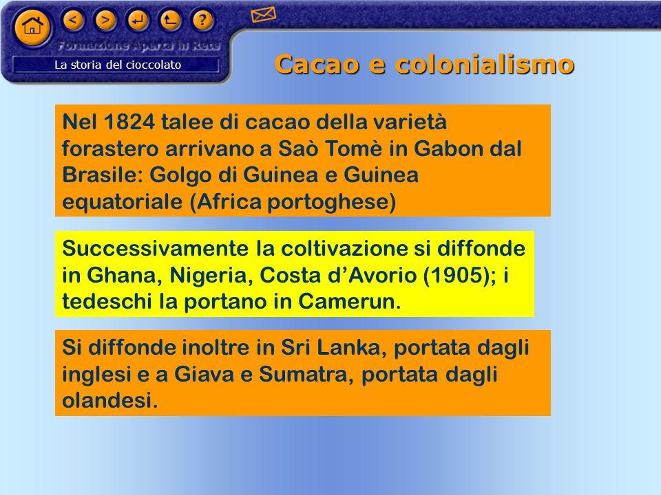 La storia del cioccolato Cacao e colonialismo Nel 1824 talee di cacao della varietà forastero arrivano a Saò Tomè in Gabon dal Brasile: Golgo di Guine